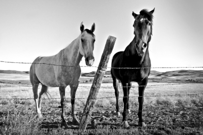 Leslie Gulch Horses